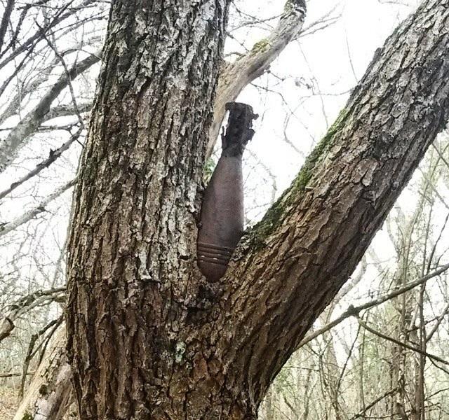 Объекты, люди и живность, завязнувшие в деревьях ( 49 фото)
