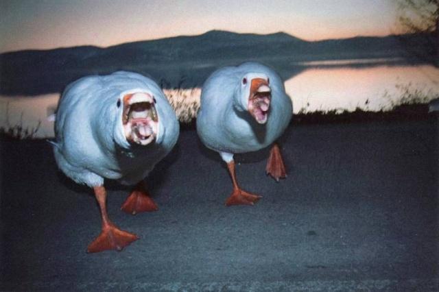 Забавные животные. часть 137 ( 50 фото )