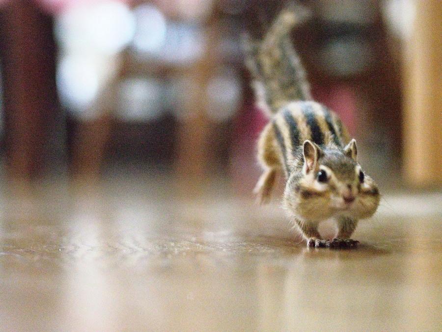 Забавные животные. часть 127 ( 50 фото )