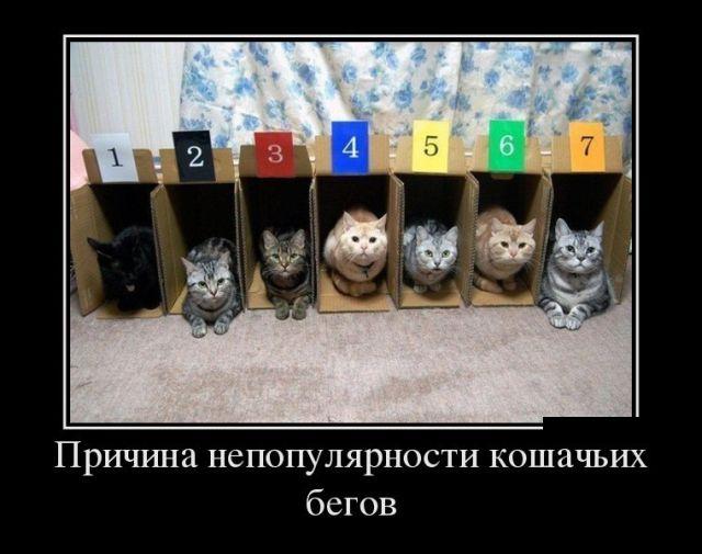 Смешные и умные демотиваторы. 515 ( 30 фото )