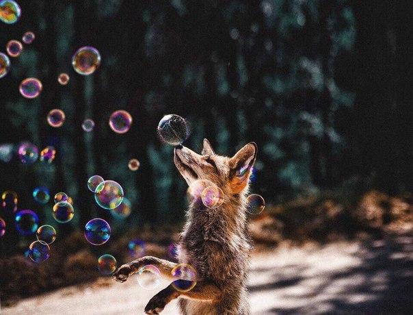 Забавные животные. часть 124 ( 50 фото )
