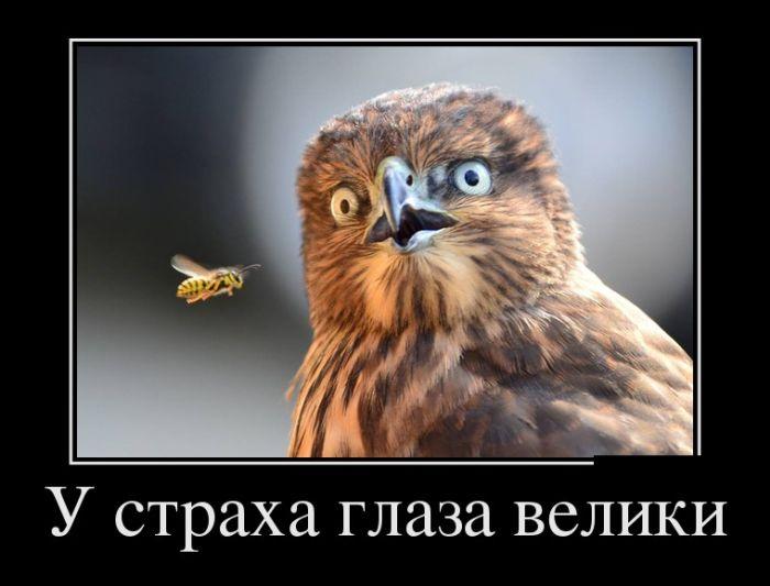 Смешные и умные демотиваторы. 480 ( 30 фото )
