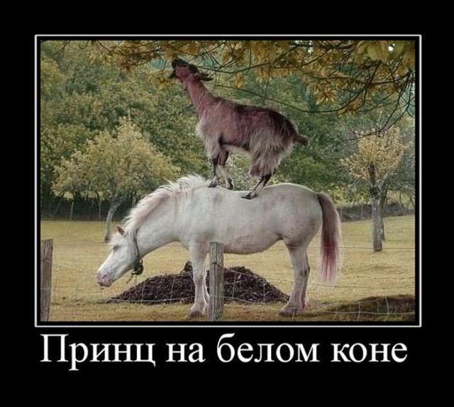 Смешные и умные демотиваторы. 490 ( 30 фото )