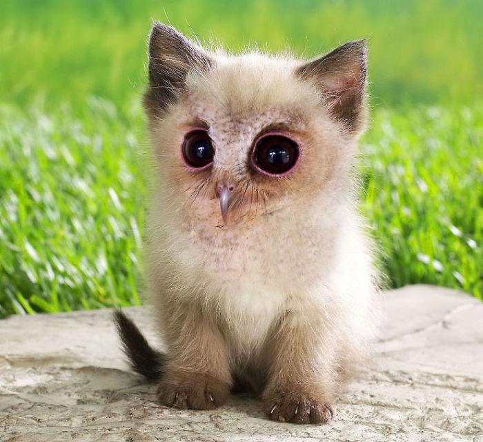 Новейшие породы — Аналогичных кошек вы еще не представляли.( 52 фото )