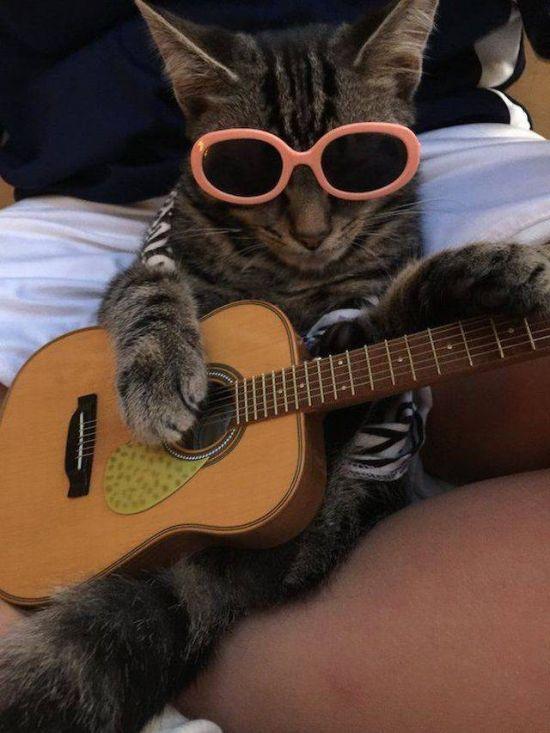 Гитаристы смешные картинки
