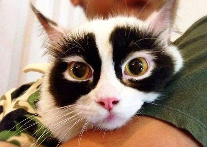 Котики необыкновенного окраса (25 фото)