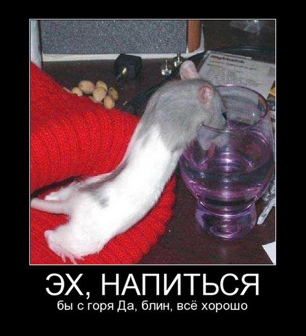Смешные и умные демотиваторы. 507 ( 30 фото )