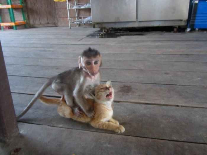 ППоложительные и забавные снимки с животными (25 фоток)