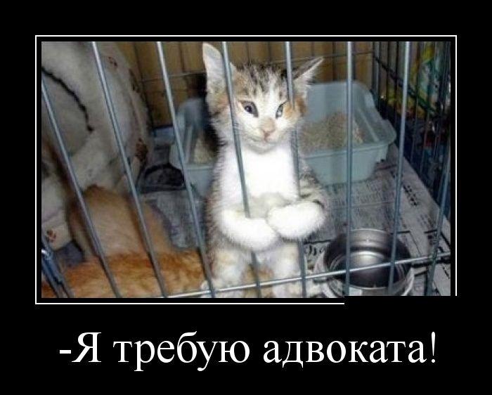 http://ww.zapilili.ru/pic/1/1/5/1/1/prikolnie_demotivators_36.jpg