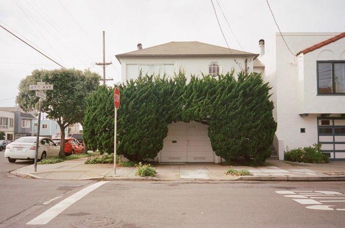Необыкновенные деревья в Сан-Франциско (8 фотографий)