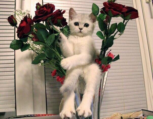 Открытки животные и цветы 22