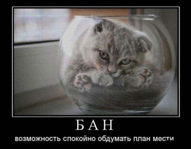 Смешные и умные демотиваторы. 488 ( 30 фото )