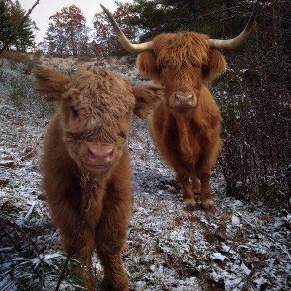 Подборка самых милых, забавных, позитивных животных. 101 фото
