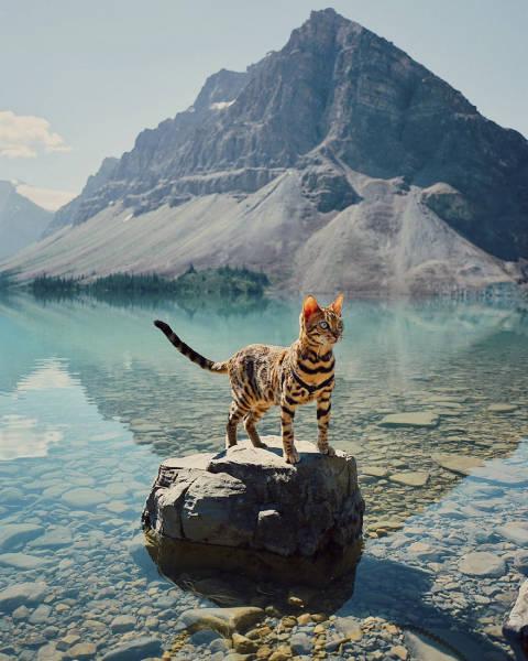 Киска-странница из Канады (36 фото)
