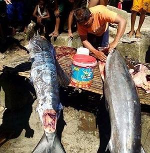 Филиппинские рыбаки выловили татуированную рыбу