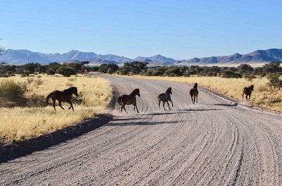 лошади намиб
