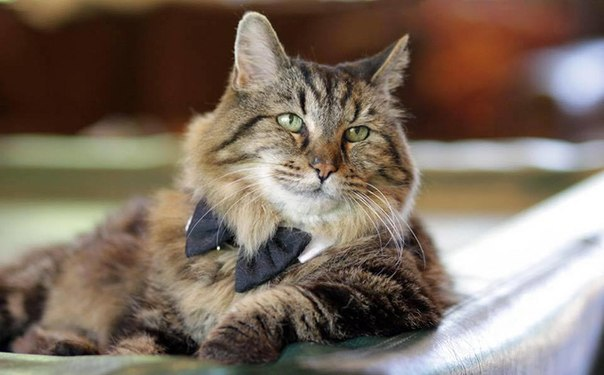 Вельвет - самый-самый старинный кот в мире