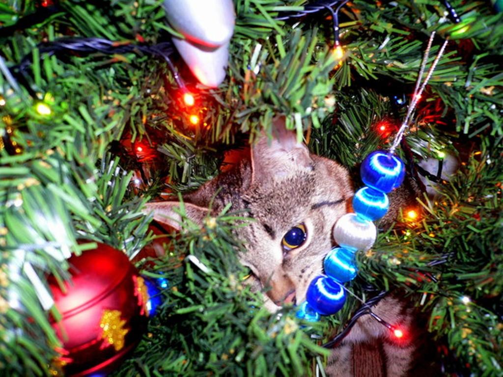 А вы нарядили елку для своих кошек... Скоро новый год ! ( 50 фото)