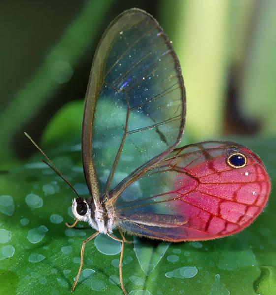 Поразительные полупрозрачные животные (34 фото)