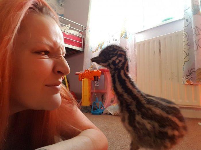 Молодая девушка приобрела яйцо и высидела птицу эму (8 фото)
