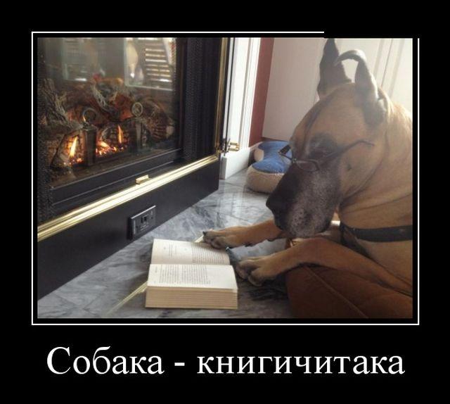 Смешные и умные демотиваторы. 521 ( 30 фото )