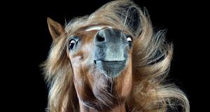 Забавные животные. часть 129 ( 54 фото )