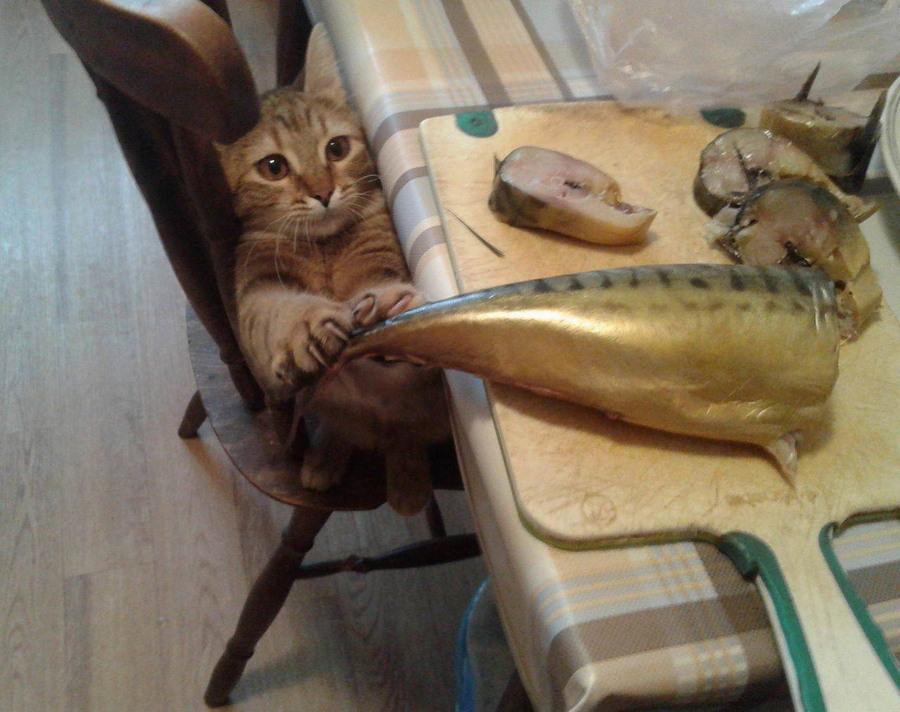 Забавные животные. часть 129 ( 53 фото )