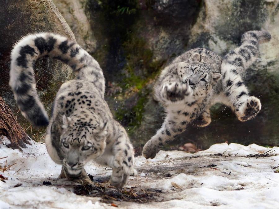 Забавные животные. часть 128 ( 54 фото )
