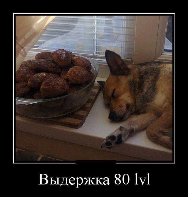 Смешные и умные демотиваторы. 530 ( 90 фото )