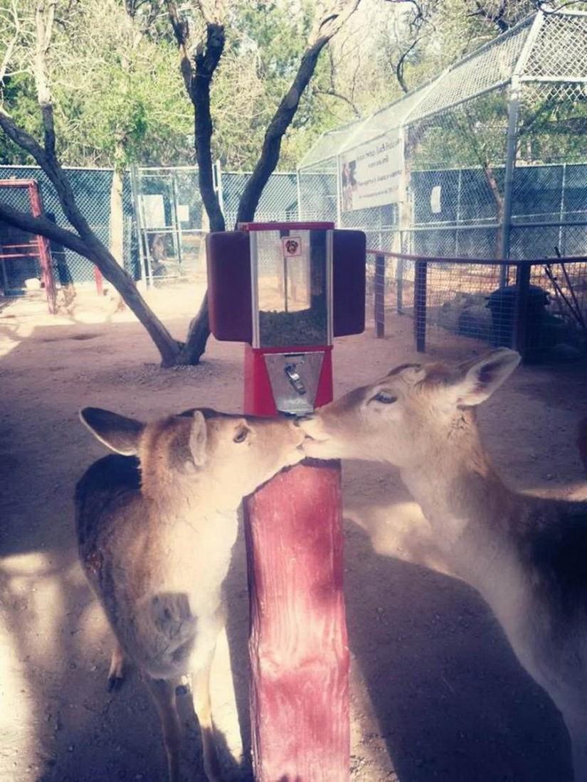 Забавные животные. часть 130 ( 50 фото )
