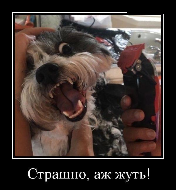 Смешные и умные демотиваторы. 534 ( 30 фото )