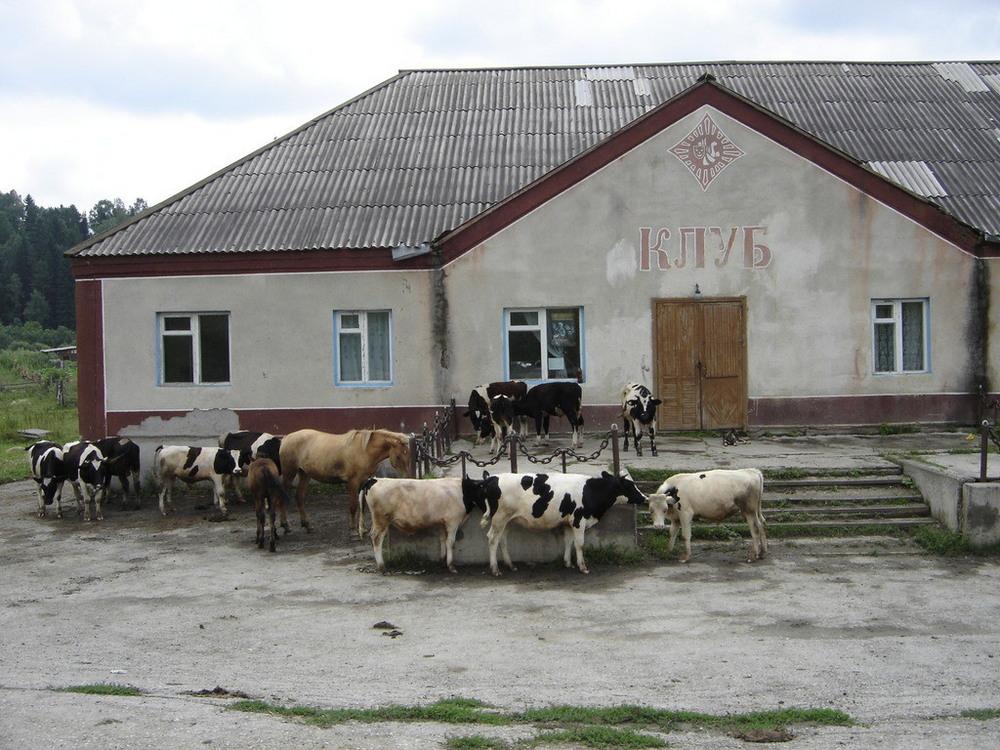 Такое возможно только в России. часть 37 ( 54 фото )