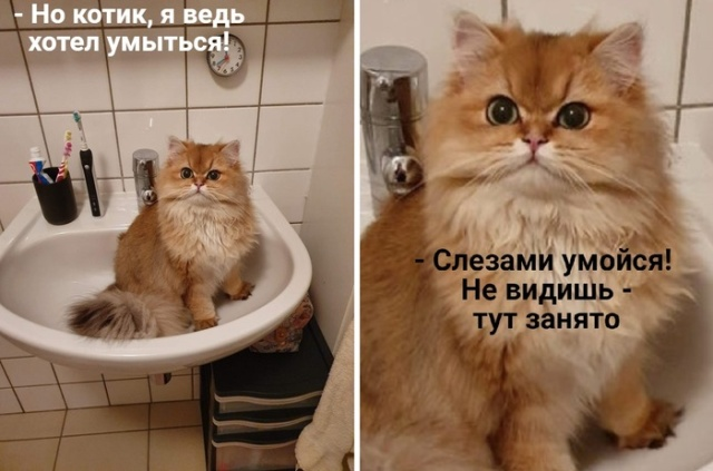 Самые смешные и забавные картинки. часть 566 ( 115 фото )