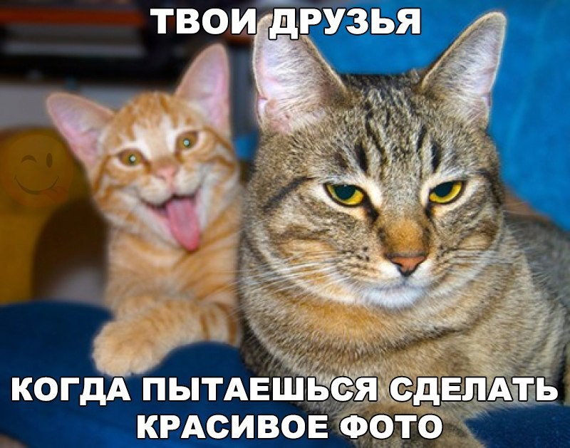 Самые смешные и забавные картинки. часть 548 ( 81 фото )