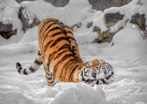 Забавные животные. часть 134 ( 82 фото )