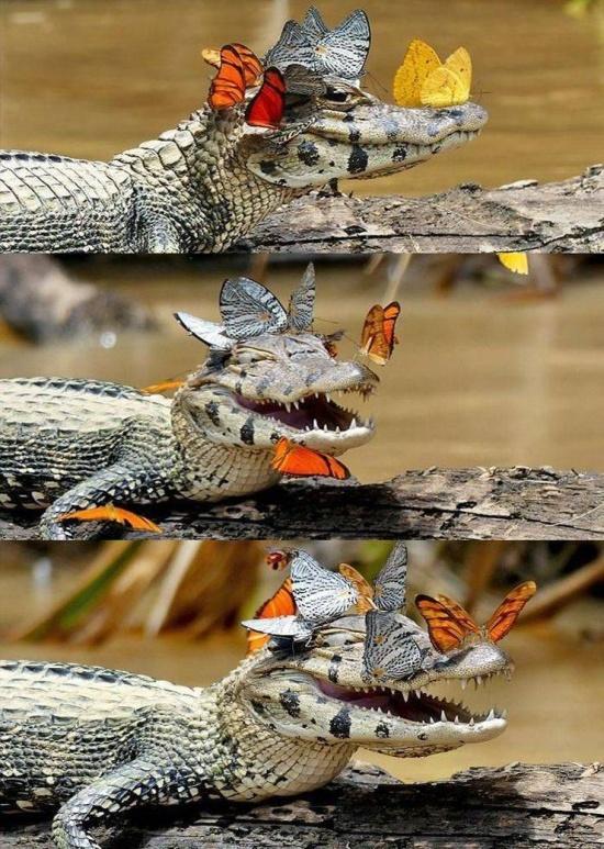 Самые смешные и забавные картинки. часть 549 ( 73 фото )