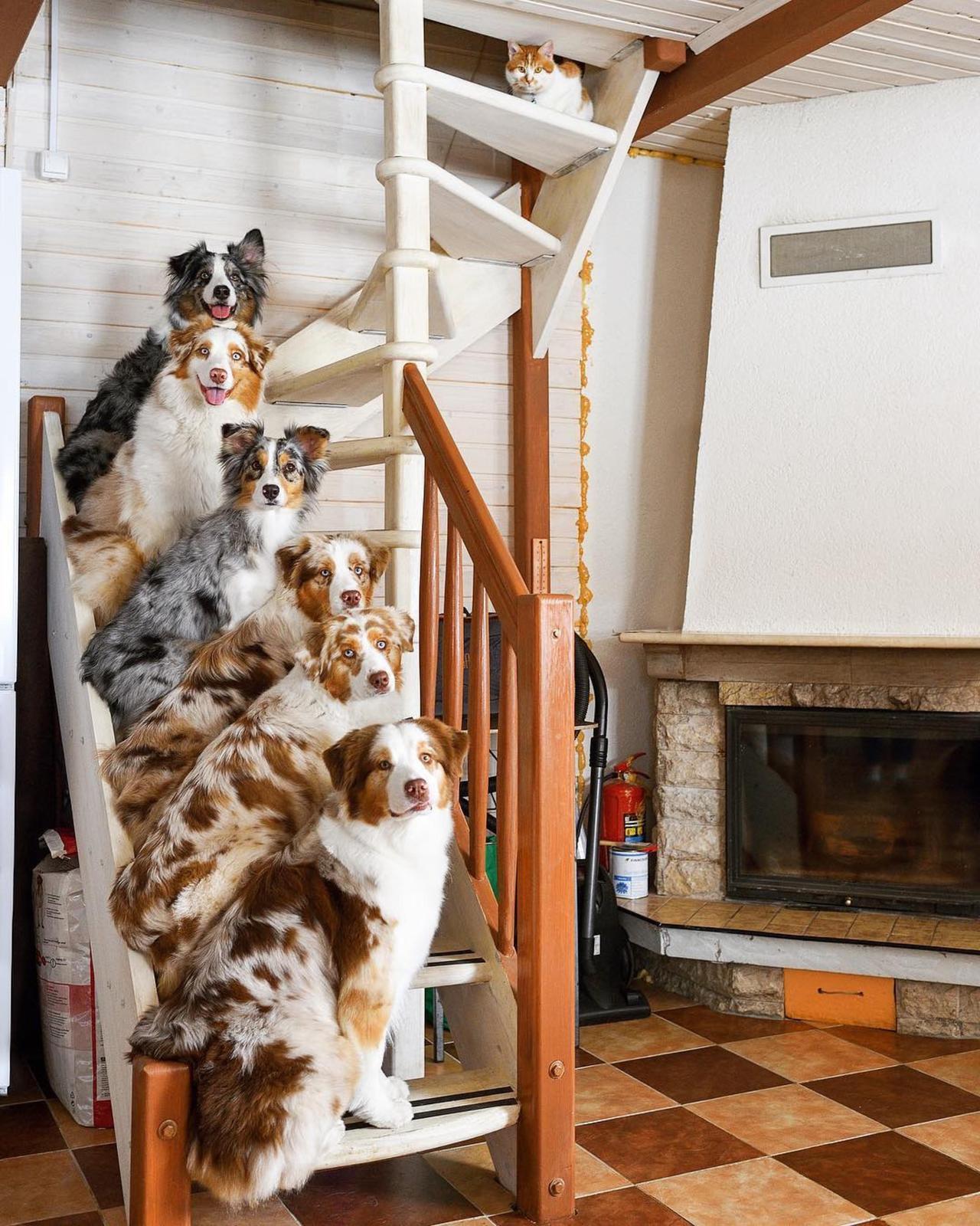 Забавные животные. часть 135 ( 87 фото )