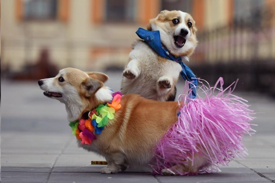Забавные животные. часть 136 ( 50 фото )