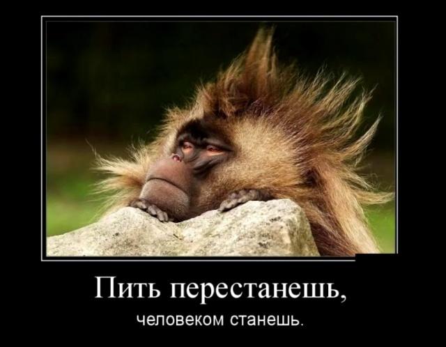 Забавные и умные демотиваторы. 562 (30 фото)