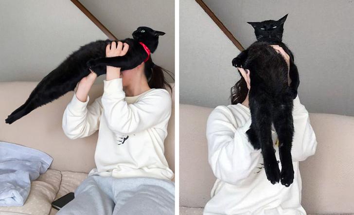 Беспардонные коты, которые точно знают, кто в доме хозяин