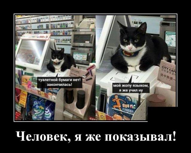 Демотиватор про кота в магазине