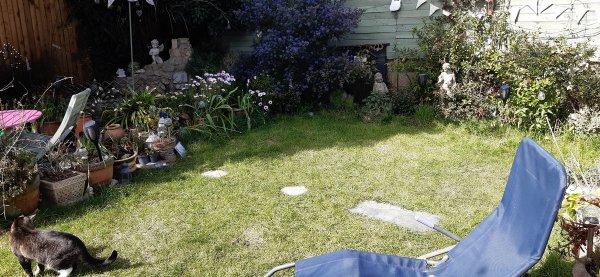 Англичанка Аманда Джонстон отыскала клад XV столетия в собственном саду (5 фото)