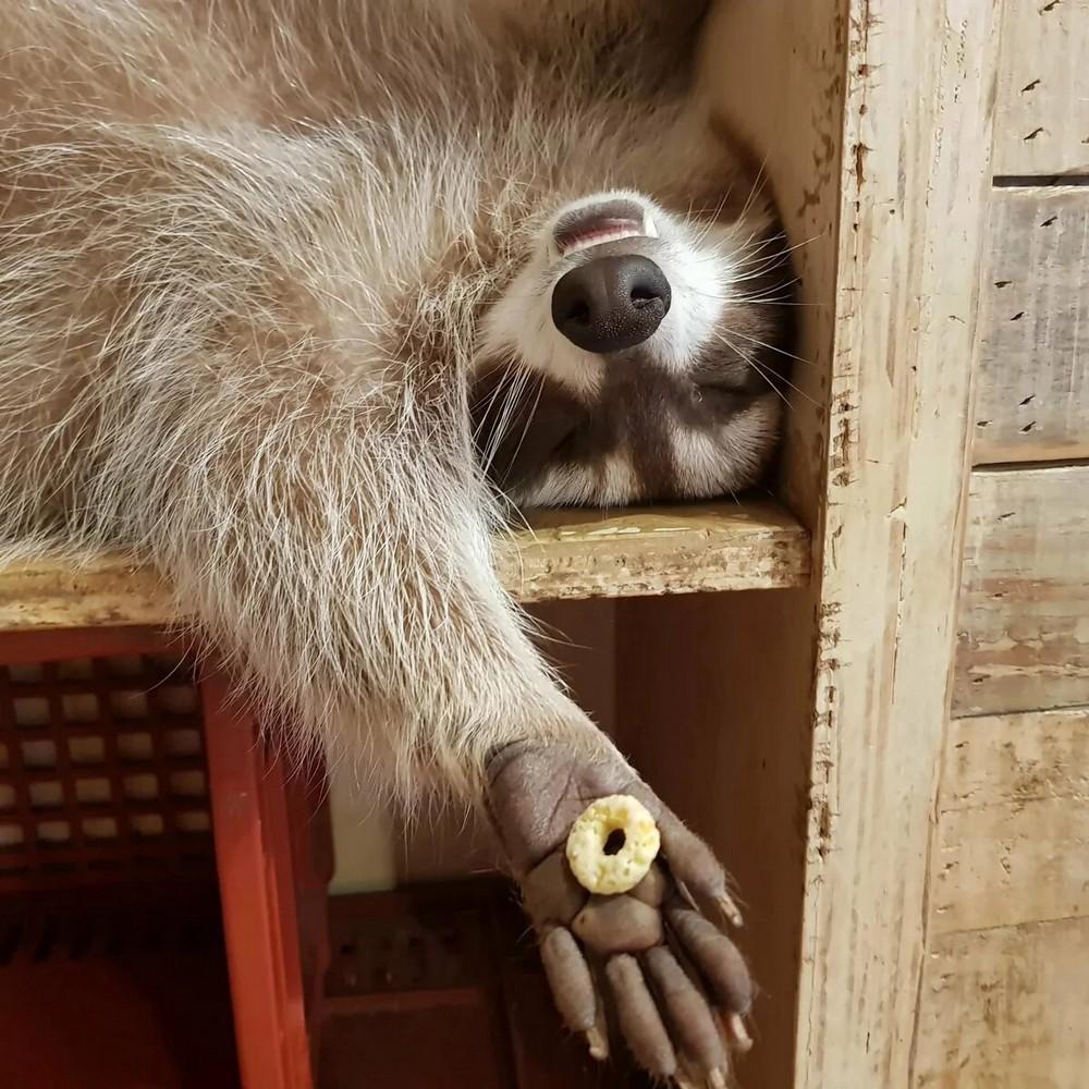 Забавные животные. часть 141 ( 53 фото )
