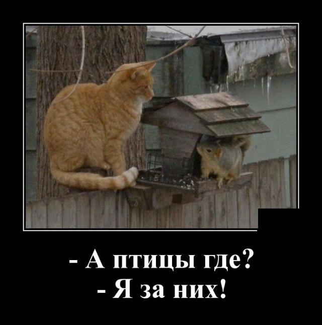 Демотиватор про кота и птиц
