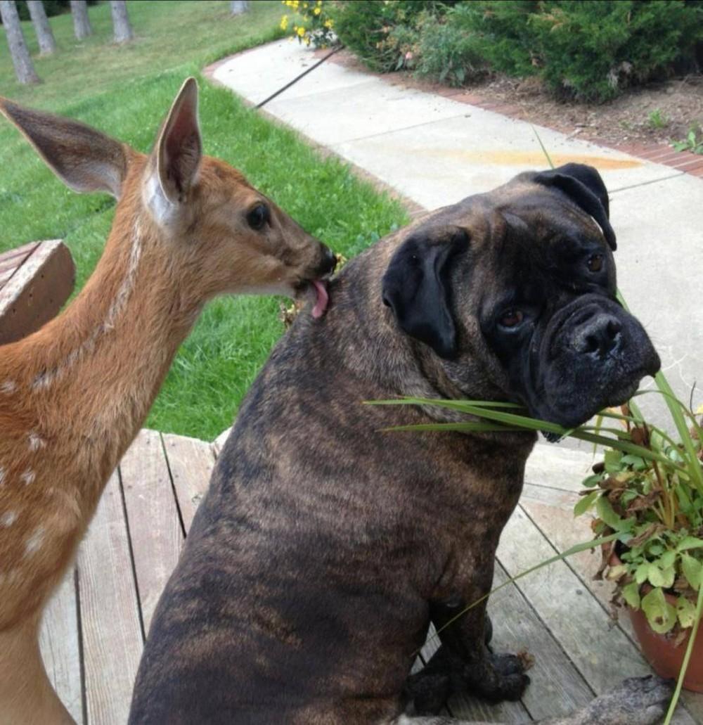 Забавные животные. Забавные животные. часть 140 ( 52 фото )
