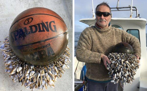 Баскетбольный мяч в ракушках