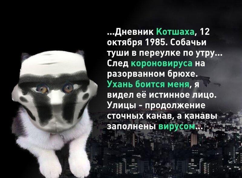Фотожабы с котом в маске (25 фото)
