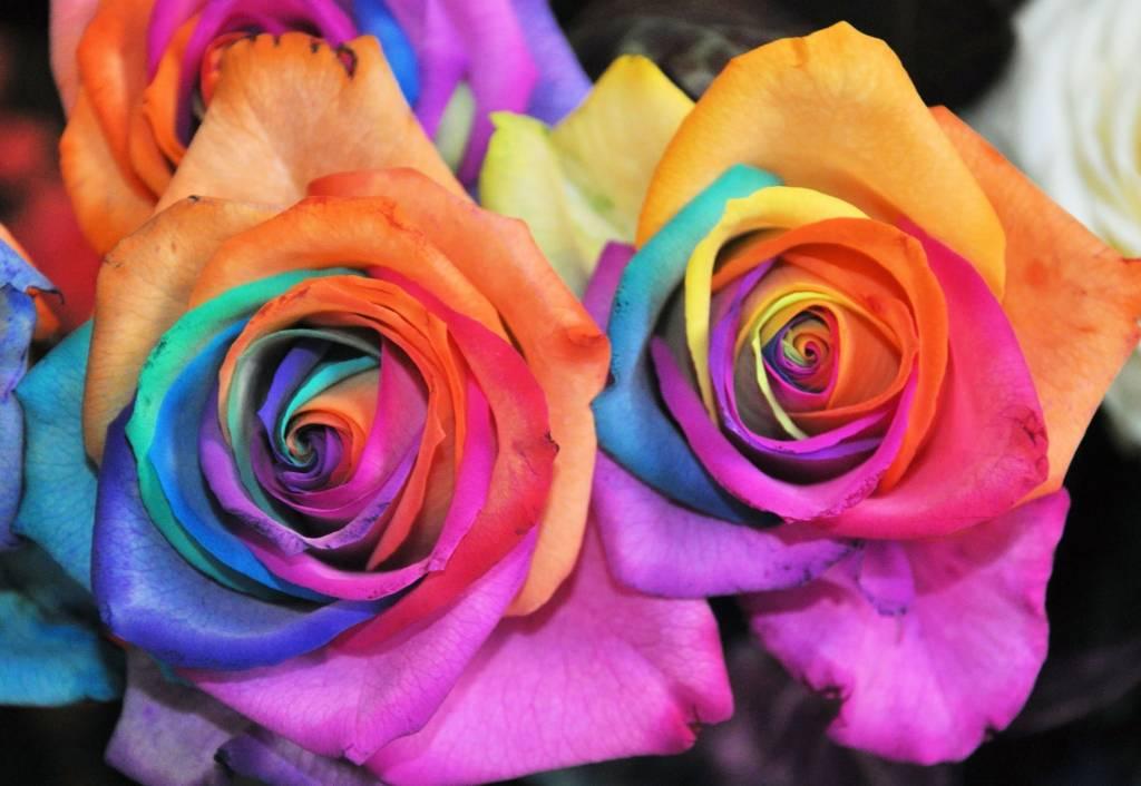 самый красивый цвет в мире фото