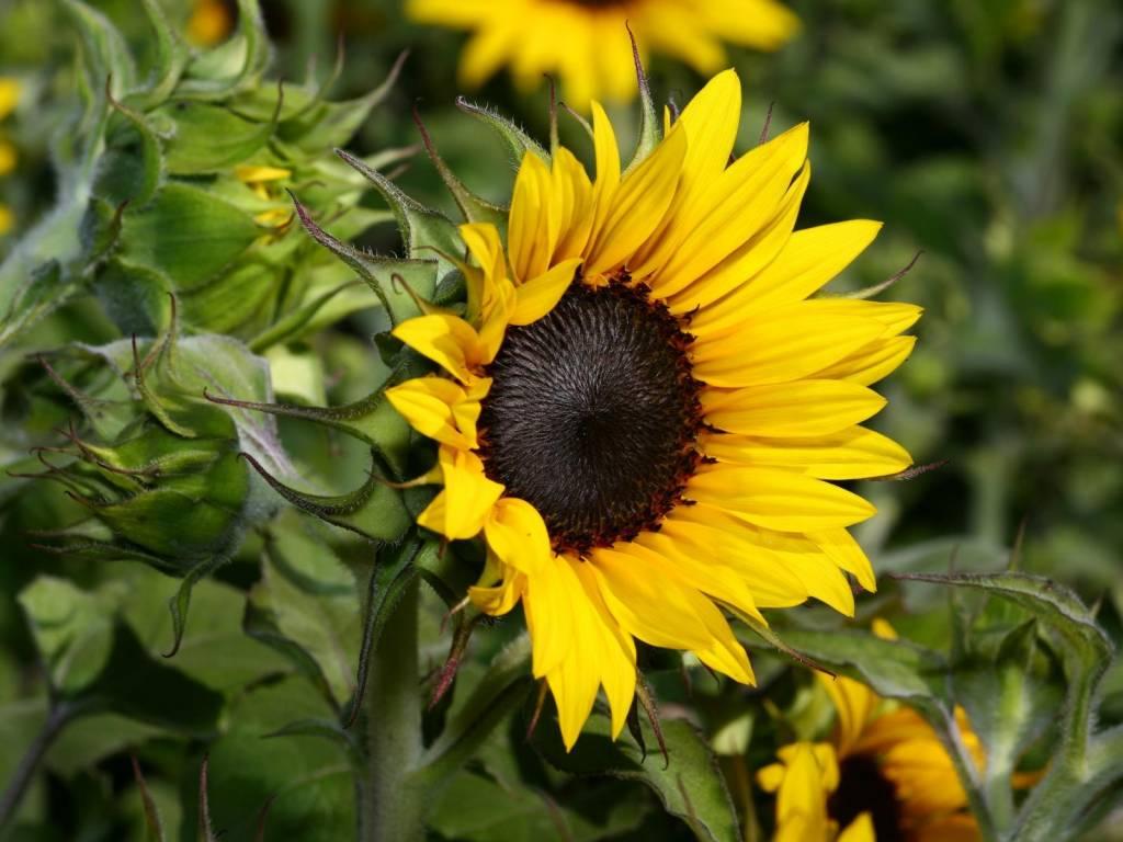 самый красивый цветок на земле