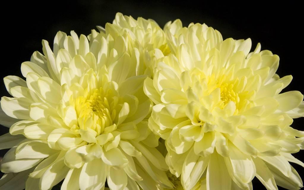 самые красивые цветы и их названия